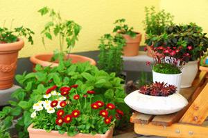 Im eigenen Garten